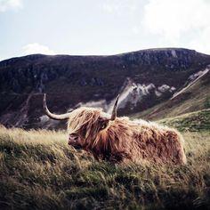 Happy World Animal Day!  ( @bowilliamsphoto)  #dunedincashmere #hairycoo #scotland #scottishwildlife #autumn #worldanimalday