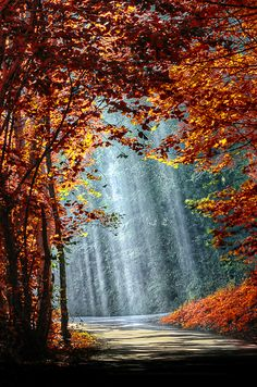 ~~Autumn is coming * ~ enchanted fall forest, Brittany, northwest France by BLOAS Meven~~ by jeri Beautiful World, Beautiful Places, All Nature, Pretty Pictures, Funny Pictures, Belle Photo, Beautiful Landscapes, Nature Photography, Around The Worlds