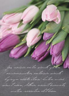 Tulips - Esmeralda's