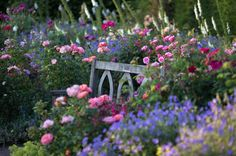 A Garden bench, suffocated by flowers doesn't mind, at all.