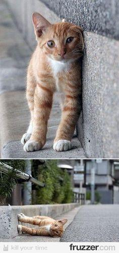 Escher Cat