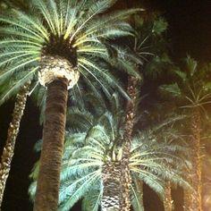 Vegas palms at night