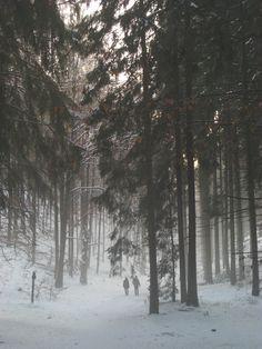 Winter in der Böhmischen Schweiz