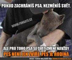 faithrestoring: Faith in Humanity Restored I Love Dogs, Cute Dogs, Save A Dog, Story Quotes, Faith In Humanity Restored, True Words, Change The World, True Stories, Pitbulls