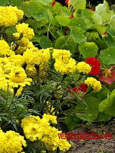 Растения против вредителей