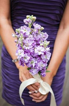 Bridesmaid's Bouquet Of: Lavender Stock Flower Hand Tied With A White Satin Ribbon
