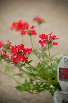 10 Colorful & Low Maintenance Window Box Plants