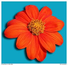 My favorite color combination! I love orange and turquoise on pretty much anything!