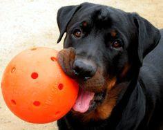 Orange Unbreakoball Indestructible Dog Toy Tough Dog Ball Aggressive Chewers