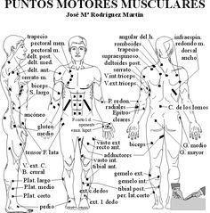 Puntos motores musculares