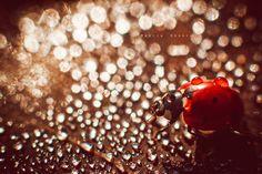 Ladybug - Natural sunlight