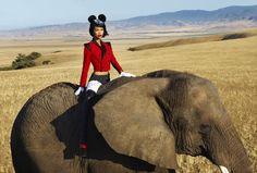 My idea of safari....