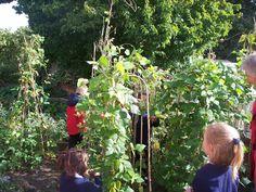 Pupils enjoying the flourishing Kitchen Garden at Orford Primary!