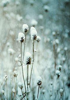 snow scene #ilikethiscm