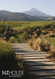 Mt Taranaki is visible from every room in the house Garden News, Driveway Entrance, New Zealand Houses, Kiwiana, Home Landscaping, Home And Garden, Garden Homes, Plant Design, Native Plants