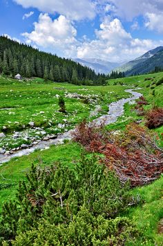 Winding mountain river flowing into the distance, Retezat Mountains, Romania