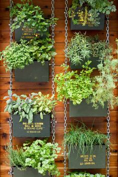 How To Urban Garden These 'Vertical Balcony Garden Ideas' will inspire you to generate space and how to make balcony vertical garden. - These 'Vertical Balcony Garden Ideas' will inspire you to generate space and how to make balcony vertical garden. Vertical Herb Gardens, Vertical Garden Diy, Vertical Planter, Herb Planters, Small Gardens, Planter Ideas, Vertical Garden Vegetables, Fence Hanging Planters, Hanging Plants Outdoor