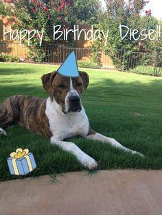 Happy Birthday Diesel!