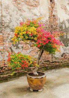 Bougainvillier en pot : les 12 erreurs à ne pas commettre Bougainvillea, Plantation, Plant Decor, Trees To Plant, Beautiful Gardens, Container Gardening, Beautiful Pictures, Bloom, Backyard