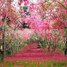 free shipping 200CM*150CM fundo twisted trees3D baby photography ...