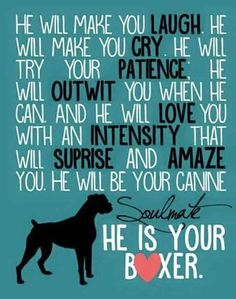 He is your boxer
