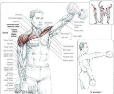 Dumbbell Front Raises Shoulder Mass Workout, Front Raises, Arm Day, Gym Workouts, Workout Routines, Mens Fitness, Bodybuilding, Health Fitness, Men Exercise