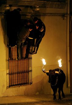 Revellers hang from a window frame to escape a bull with flaming horns. Spain.