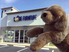 Kobe wants you to stop by our 8,000 sq.ft showroom in Boca Raton and get $100 store credit on each $1,000 spent at the store and online!! Hurry in, the sale ends July 31st!   Also check our inventory of modern and contemporary furniture at www.sobefurniture.com!   #RefreshYourHome #ModernFurniture #KobeFromSobe  #CanYouSpotKobe? #sale   #interiordesign #interior #decor #homedesign  #furniture #Miami #sofa #sectional #dining #table #chair #leather #modern #bed #living #bedroom #italian