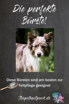 Welche Bürste ist die perfekte für meinen Hund? -- Hunde | Fellpflege | Unterwolle | Unterfell | Hundebürste | Pflege Hunde | thepellmellpack.de
