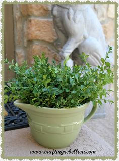 This blogger teaches you how to preserve boxwood so that you can use the branches for topiaries, wreaths and other decorative items.  It's much cheaper than buying the super expensive already made items!