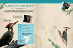 Interior Spread: Birds—Field Guide & Drawing Book: Learn how to identify and draw birds from the great outdoors! Create Drawing, Drawing Practice, Lexile, Maritime Museum, Animal Facts, Reading Levels, Field Guide, Children And Family, Great Photos