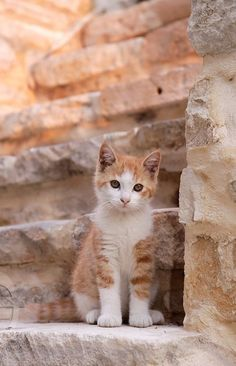 Where do you reckon those steps would lead to? Hopefully to more cute kittens like this one. Cute Kittens, Cats And Kittens, Cats Bus, Fluffy Kittens, Ragdoll Kittens, Tabby Cats, Bengal Cats, Fluffy Cat, I Love Cats