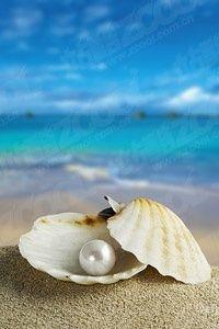 Sea shells in pearl background Beach Wallpaper, Wallpaper Backgrounds, Pearl Background, Sea Pearls, Art Mural, Ocean Waves, Ocean Beach, Belle Photo, Beautiful Beaches