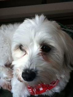 Un merveilleux chien qui s'appelle Scott!!!