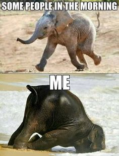 Lustige Tiermemes - Funny animal memes make me laugh - Funny Animal Jokes, Crazy Funny Memes, Really Funny Memes, Stupid Funny Memes, Cute Funny Animals, Funny Relatable Memes, Funny Animal Pictures, Haha Funny, Cute Baby Animals