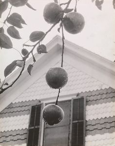 Alfred Stieglitz, Gable and Apples, 1922