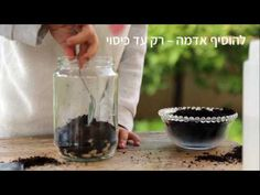 Terri&Sol - How To - DIY Terrarium growing kit with edible herbs.  ערכת יצירה וזריעה אקולוגית טֶרִי&סוֹל - הדרכה שלב אחר שלב