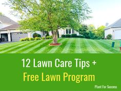 The best time to top dress your lawn is when it is actively growing and you are heading into prime growing conditions. For cool season grasses late summer/early fall is best. You Lawn Care Schedule, Lawn Care Tips, Lawn Soil, Weeds In Lawn, When To Prune Hydrangeas, Pruning Hydrangeas, Day Lilies Care, Core Aeration, How To Kill Grass