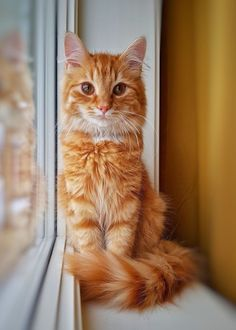 Click the Photo For More Adorable and Cute Cat Videos and Photos - Adorable Cats and Cute Kittens - Katzen Bilder Cute Cats And Kittens, Cool Cats, Kittens Cutest, Pretty Cats, Beautiful Cats, Animals Beautiful, Beautiful Images, World Cat Day, Baby Animals