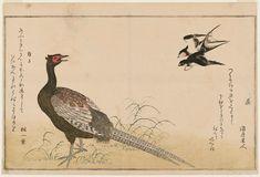 Artist: Kitagawa Utamaro Title: Swallows (Tsubame) and Green Pheasant (Kiji), from the album Momo chidori kyôka awase (Myriad Birds: A Kyôka Competition) Date: 1790