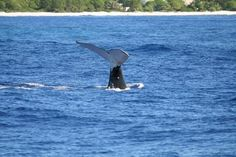 Spring and summer are the best times for whale watching in Massachusetts. Feeding grounds, Types of Whales etc.