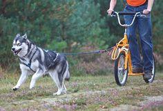 Pawtrekker dog scooters looks like fun!