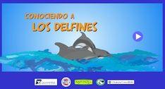 Conociendo a los cetáceos