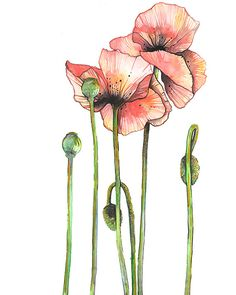 Coral Pink Poppy flowers art print https://www.etsy.com/listing/247273801/watercolor-art-print-pink-coral-poppy