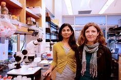 Biologists at The Scripps Research Institute (TSRI) have identified a brain hormone that appears to trigger fat burning in the gut. Their findings in animal models could have implications for future pharmaceutical development.