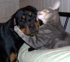 You need a kiss!