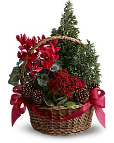 Our festive Christmas centerpieces will bring cheer to your home this season. Send Christmas flowers & fruit baskets delivered fresh by the holidays, guaranteed! Christmas Flower Decorations, Christmas Flower Arrangements, Christmas Flowers, Christmas Centerpieces, Christmas Wreaths, Floral Arrangements, Live Christmas Trees, Christmas Plants, Rustic Christmas