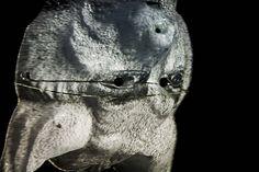 """Animal Farm. 2014 Aus der Serie """"Aufstand der Tiere"""" 2014 Rotierende Skulpturen aus Tier Masken, Schwarz Licht und Projection Mapping aus der Serie """"Pathfinder"""" Skulptur, Objekt, Video, Installation, Fotografie Markus Wintersberger 2014"""