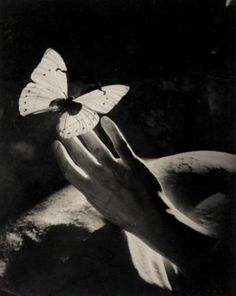 'Happiness is a butterfly, which when pursued, is always just beyond your grasp, but which, if you will sit down quietly, may alight upon you.' Nathaniel Hawthorne [photo: Peter Rose Pulham,1930s]