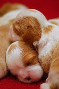 This is the real puppy love...